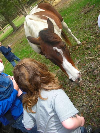 Breighton loved the horses...
