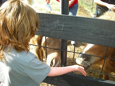 Feeding the horses....LICK!