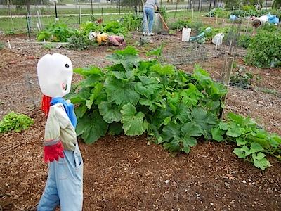 Bs 4H garden